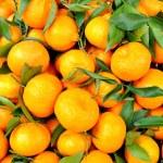 Tangerines — Stock Photo