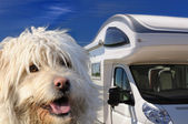 Camper and dog — Stock Photo