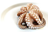 Raw octopus — Stock Photo