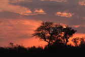 Sunrize in Elephant Plains — Stockfoto