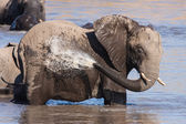 African Elephant bathing — Stock Photo