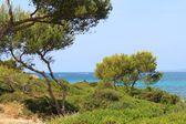 Schöne Idylle auf Mallorca — Foto Stock