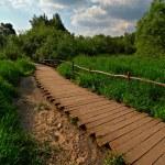 Wooden pathway — Stock Photo