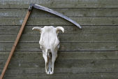 Scythe and skull — Stockfoto