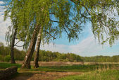 Spring landscape with birches on the foreground — Stock Photo