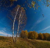 Stitched Panorama. Autumn landscape. — Stock Photo