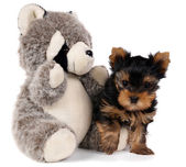 Puppy and toy panda — Stock Photo