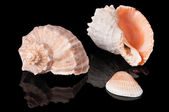 Seashells on black — Stock Photo