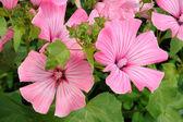 Small group of beautiful flowers (petunia) — Stock Photo