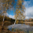 Two birches near pond — Stock Photo #32417935