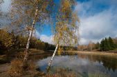 Two birches near the pond — Stock Photo