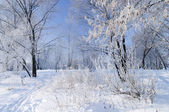 Hoarfrost on the trees — Stock Photo