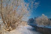 утки на реке — Стоковое фото