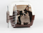 Dog in the pet carrier — Stock Photo