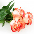 Rose flower - Stock Photo