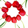 Flowers red tulips — Foto Stock