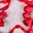 Tulip on canvas background with red ribbon — Stock Photo
