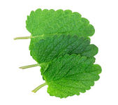 Lemon balm, mint — Stock Photo