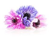 Purple anemones — Stock Photo