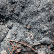 Ash coals — Stock Photo #30756847