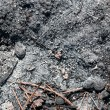 Stock Photo: Ash coals