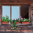 Wood window — Stock Photo