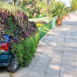 Car under the plants — Stock Photo