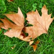 Leaf on green grass — Stock Photo #34345749