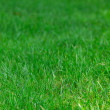 Green grass — Stock Photo #34346137