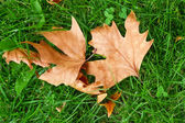 Leaf on green grass — Stock Photo