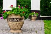 Flower, flowerbed Petunia — Stock Photo