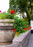 Flower, flowerbed Petunia — Foto Stock