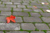 Yellow leaf on paving stone — Stock Photo