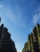Trees alley sky — Stockfoto