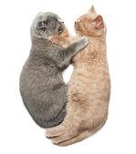 Two kittens hugging sleep — Stockfoto