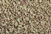 Cat  filler sand — Stock Photo