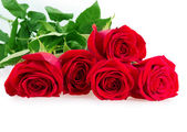 Red pink roses — Stock Photo