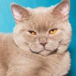 Постер, плакат: Ginger cat