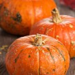 Pumpkins on a wooden table — Stock Photo