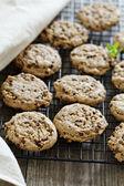 Chocolade chip cookies — Stockfoto