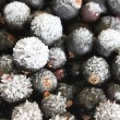 Frozen currants - Stock Photo