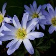 Blue flower — Foto Stock #13285085