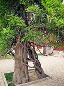 Two trees — Stock Photo