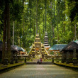 Monkey forest in Bali (Sangeh) - Stock Photo
