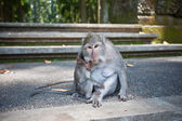 Monkey with a baby — Stock Photo