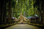 Monkey forest in Bali (Sangeh) — Stock Photo