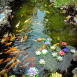 Carp Pond Colorful Artificial Water Lillies Jade Buddha Temple Jufo Si Shanghai China Most famous buddhist temple in Shanghai - Stock Photo