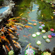 Carp Pond Colorful Artificial Water Lillies Jade Buddha Temple Jufo Si Shanghai China Most famous buddhist temple in Shanghai — Stock Photo #18834899