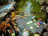 Carp Pond Colorful Artificial Water Lillies Jade Buddha Temple Jufo Si Shanghai China Most famous buddhist temple in Shanghai — Stock Photo