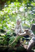 Monkey sitting on a branch — Stock Photo